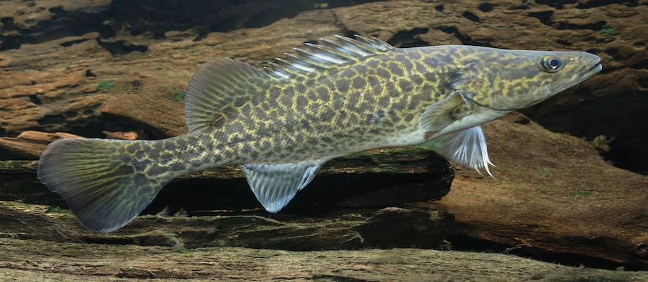 Waterways & Fish Recovery | SAT 30 JAN