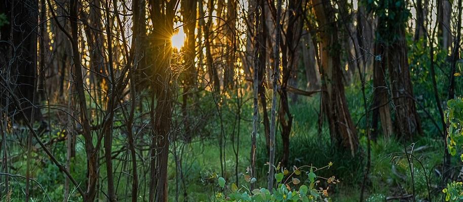 Nature Photography - Morning Light