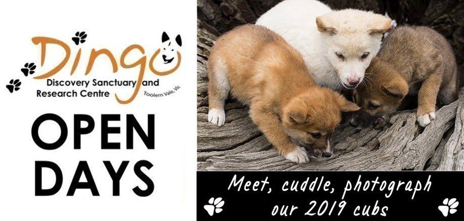 Sun 25 Aug Open Day   Dingo Puppy Encounters