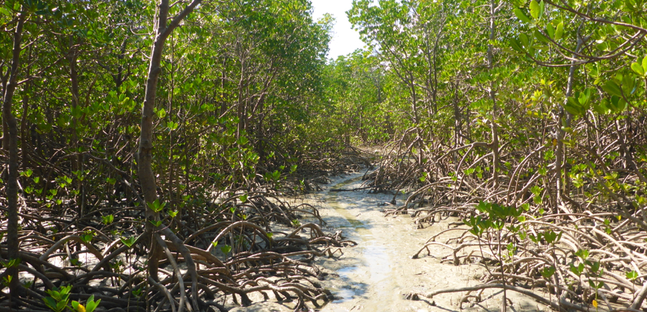 Mangroves Story Walk