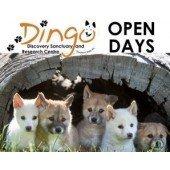 Sun 11 Aug Open Day | Dingo Puppy Encounters