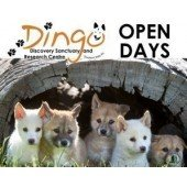 Sat 31 Aug Open Day | Dingo Puppy Encounters