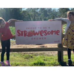 Chambers Flat Strawberry Farm | Pick Your Own Strawberries | SAT 25 JULY