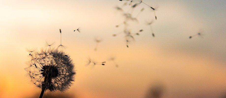 Sowing Seeds - Morris Gleitzman