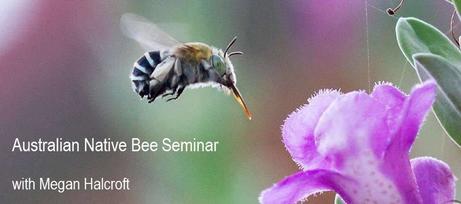 Australian Native Bee Seminar