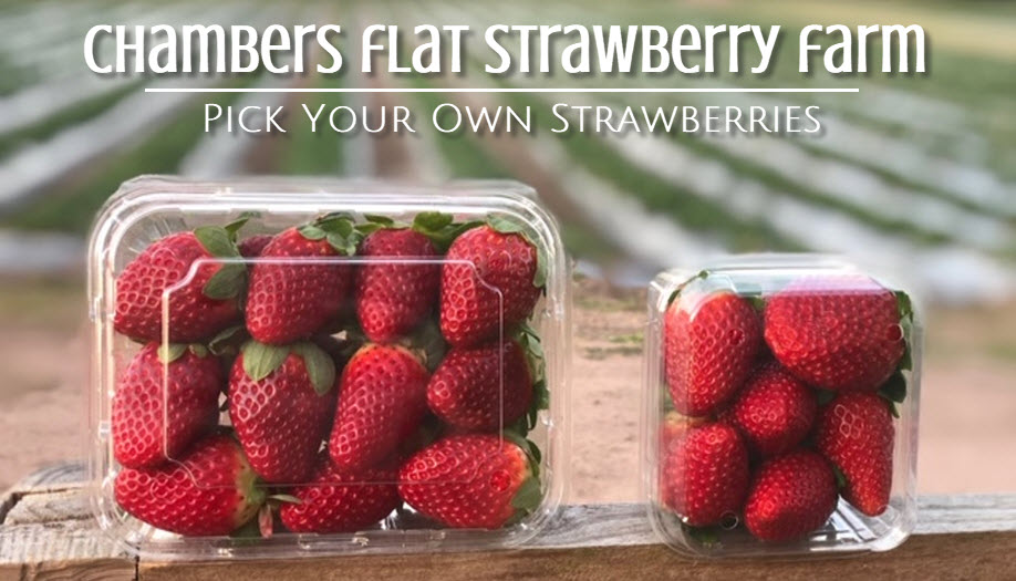 Chambers Flat Strawberry Farm | Pick Your Own Strawberries | FRI 24 JULY